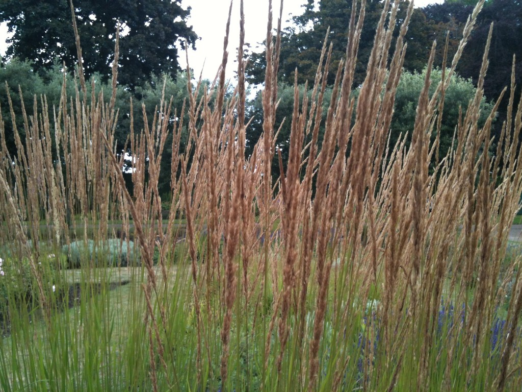 Floweringgrasseatonpark