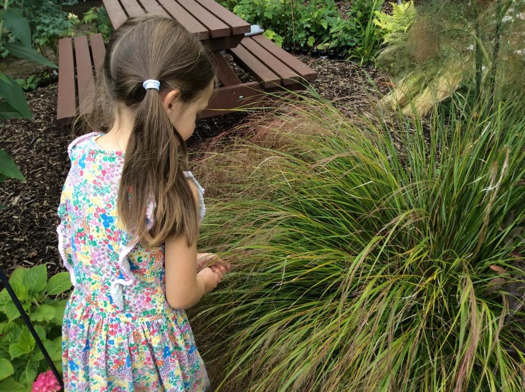 Touchingpheasantstailgrass
