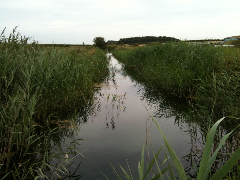 Cleymarshes