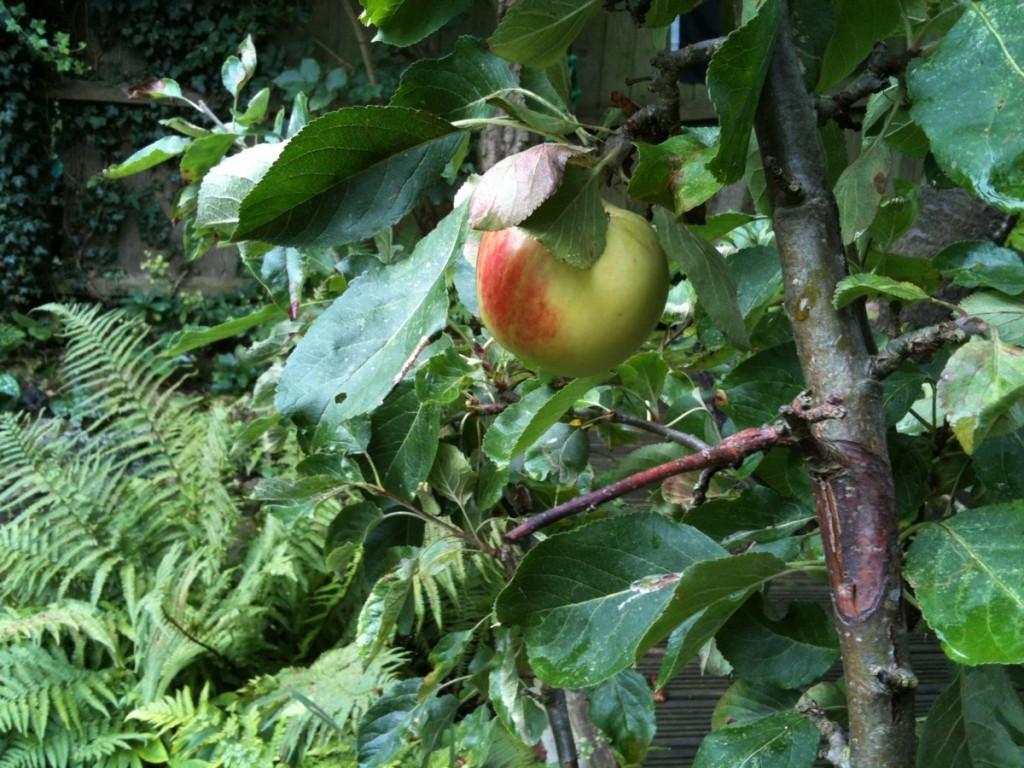 Autumn apple