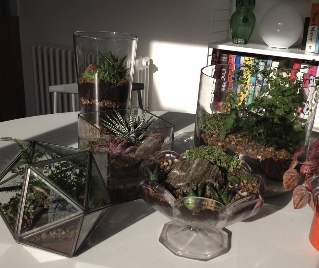 Five finished terrariums