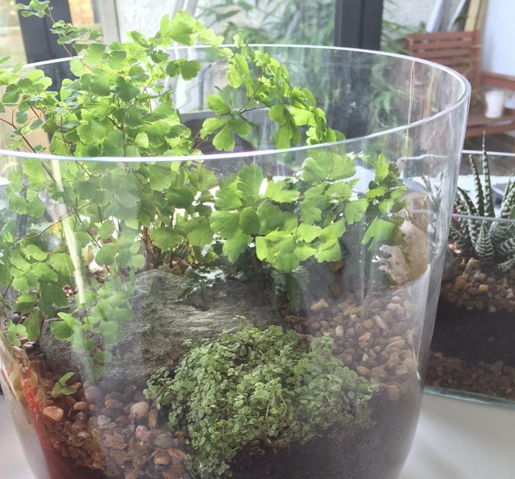 Large ferns vase
