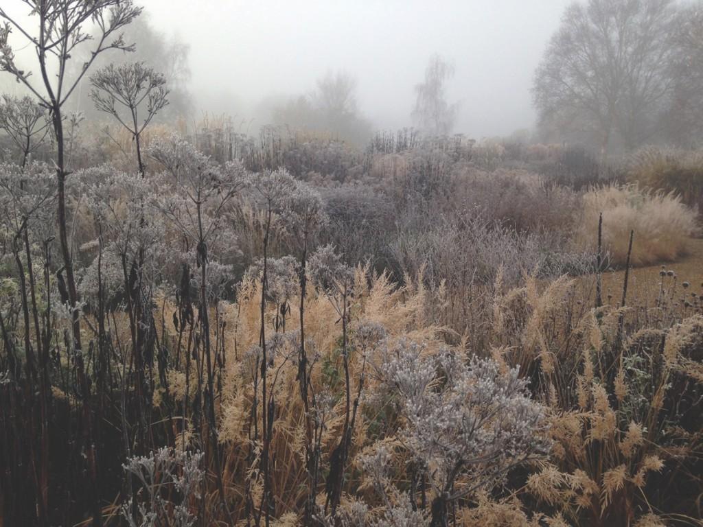 PNP Winter Millennium Garden