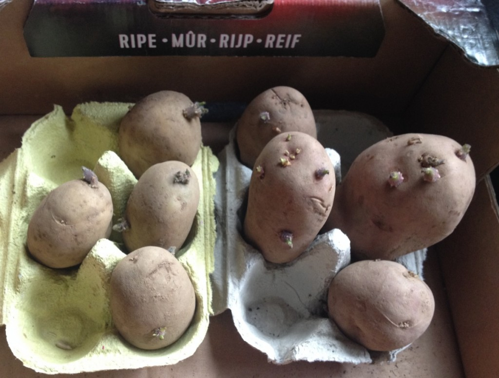 Potatoes in egg boxes