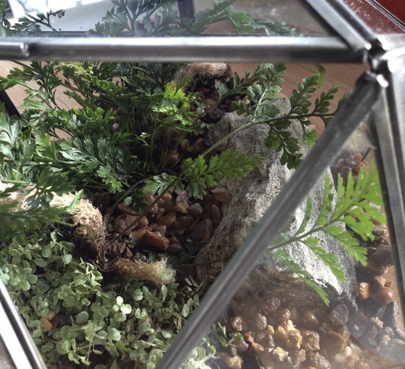 Terrarium with ferns