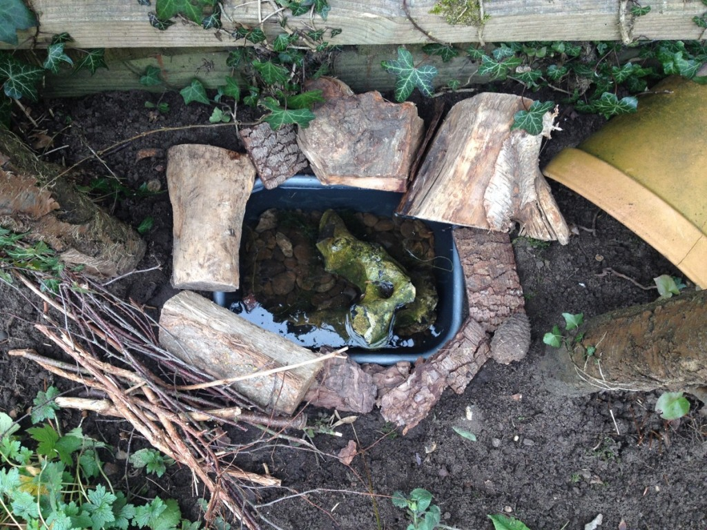 How to make a mini frog pond the small gardener for Making a garden pond