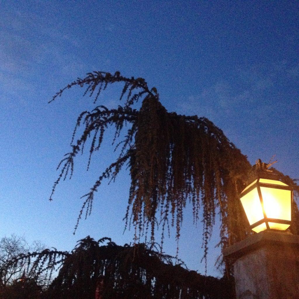 Disney Spooky Conifer