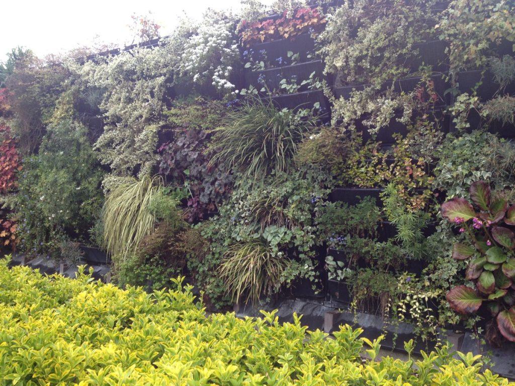 Disney Vertical Garden 1