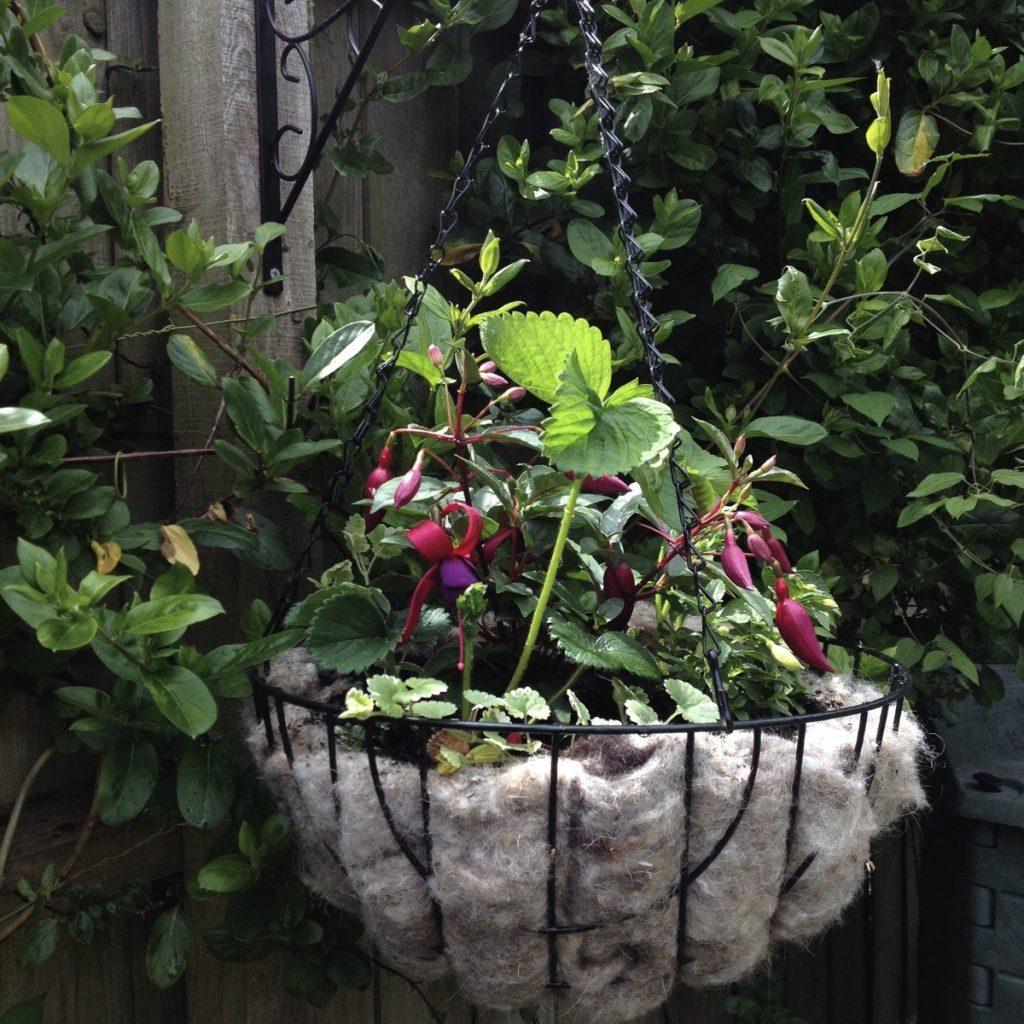 Hanging basket C