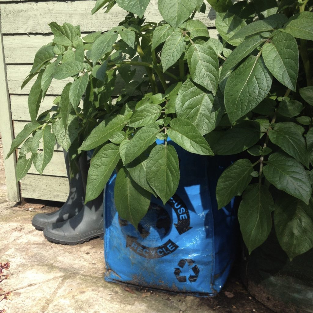 June recycling bag