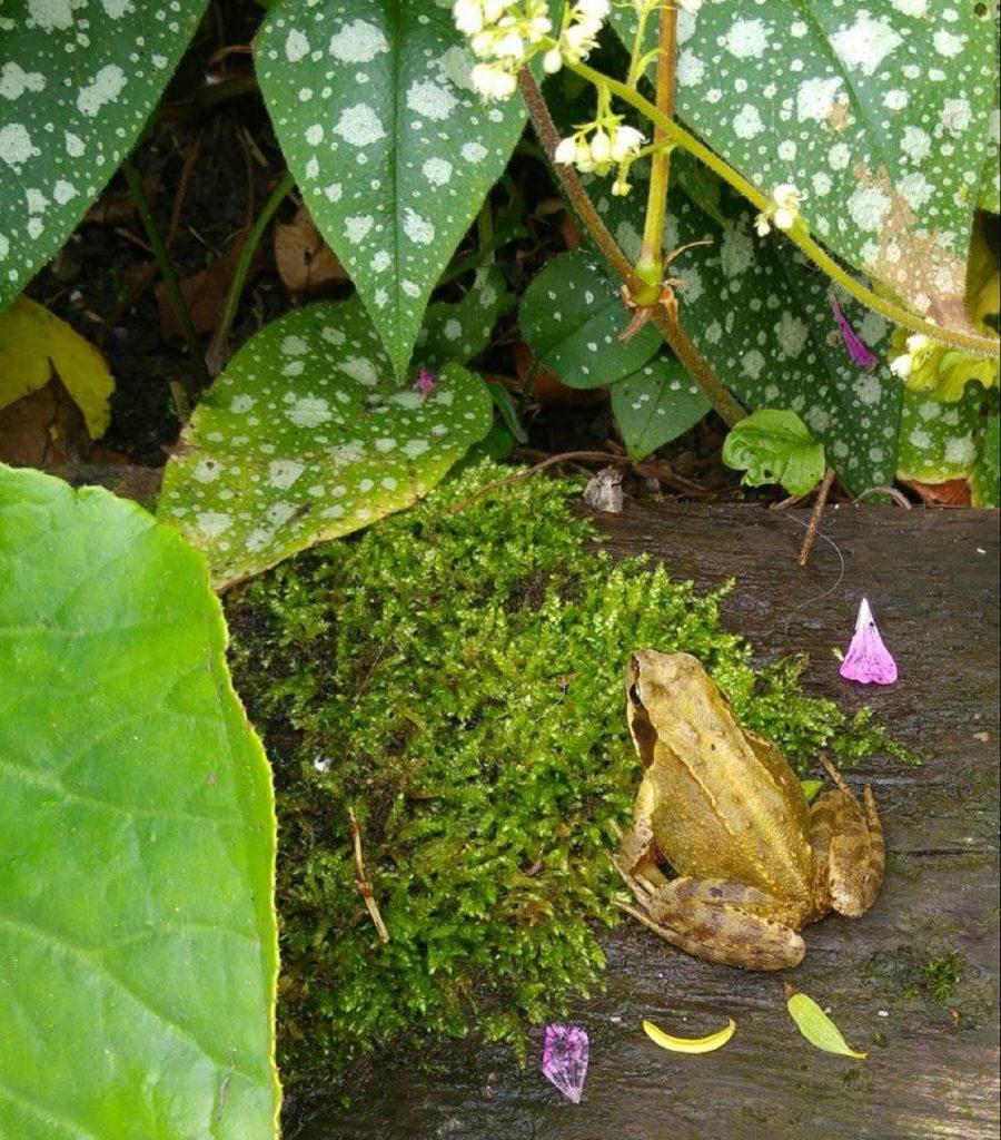 Open garden frog