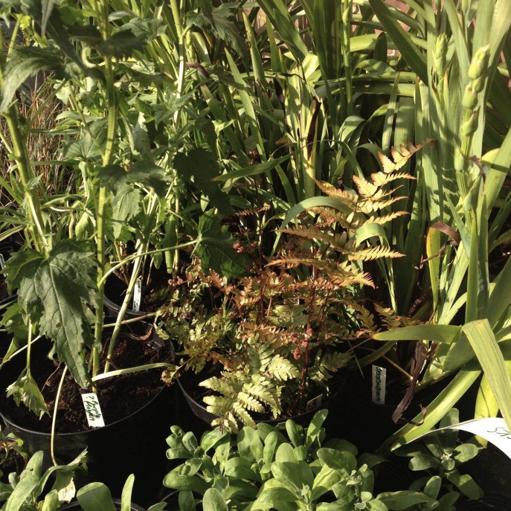 Open garden plant sale
