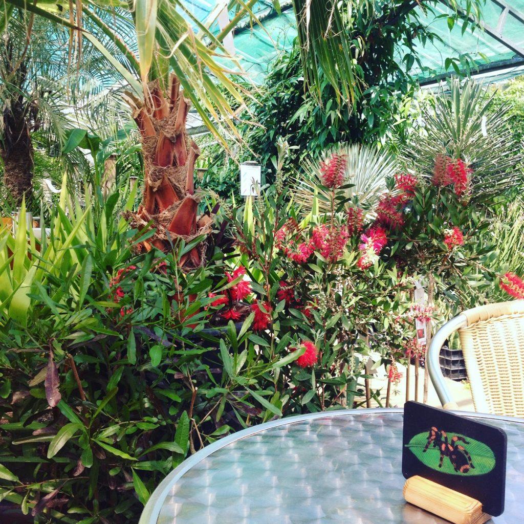 Urban jungle cafe