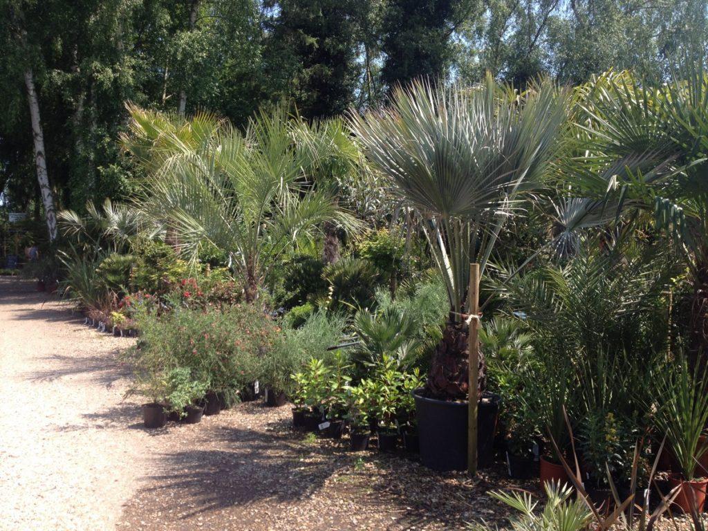 Urban jungle palms