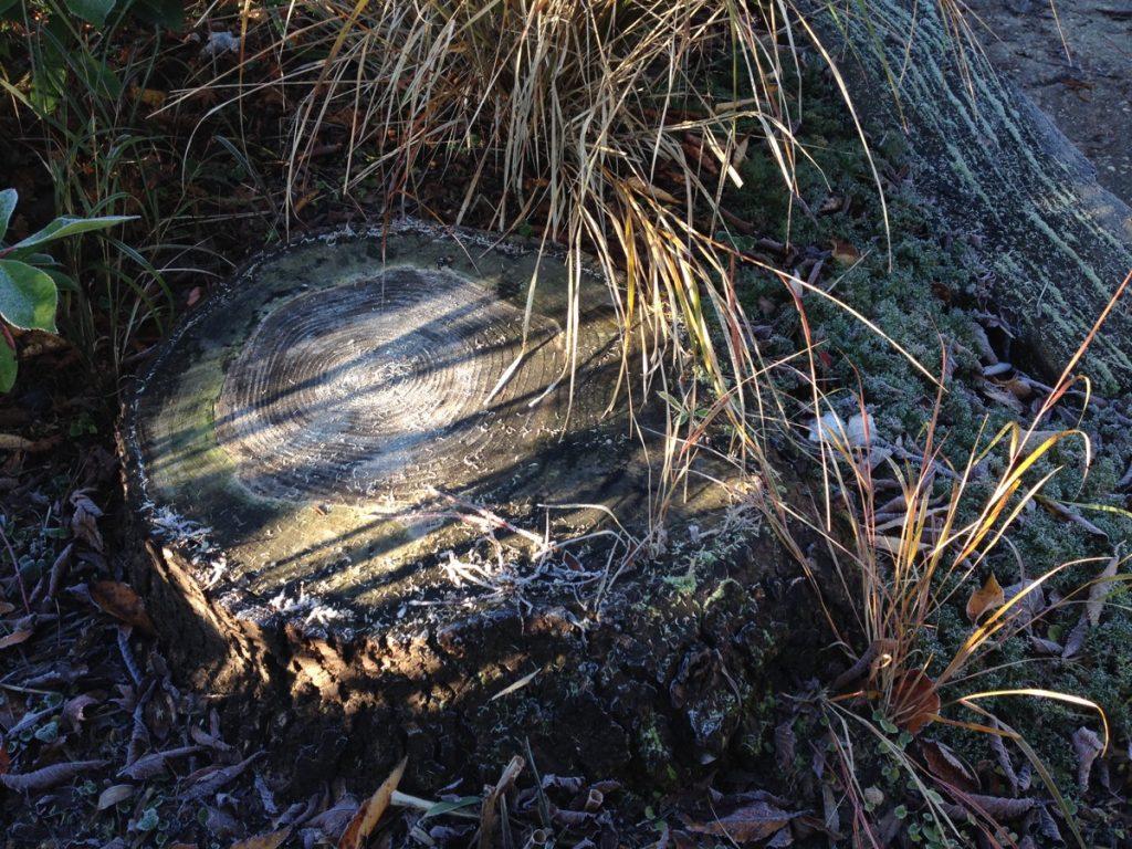 frost-nov-stump