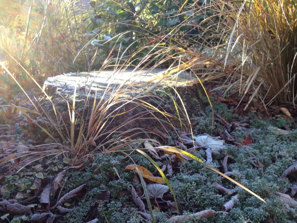 frost-nov-stump2