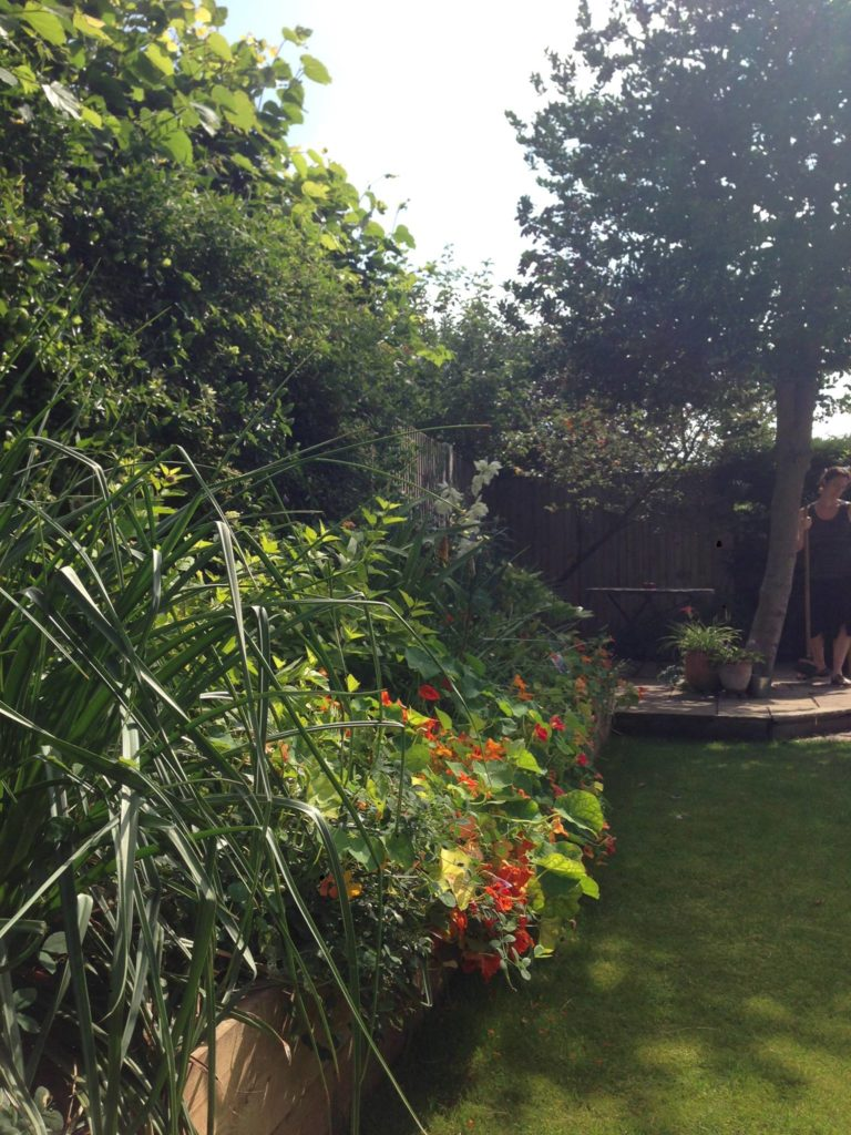 Family Garden Portersfield Road Norwich The Small Gardener